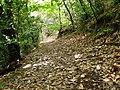 Camino en Osorio 1 - panoramio.jpg