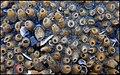 Capsules ovigères (chacune contenait plusieurs oeufs) du gastéropode Nucella lapillus estran Wimereux mi 2016 F Lamiot 08.jpg