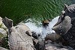 Caserta Fuente de los Delfines 06.jpg