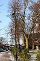 Castle Gardens, Lisburn, November 2010 (13).JPG