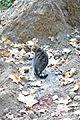 Cat @ Parc de l'Ile Saint-Germain @ Paris (30702841952).jpg