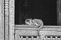 Cat and Woodoerk at Kumbeshwar Temple (8094974023).jpg