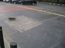 File:Cat chasing a pigeon.webm