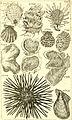 Catalogue systématique et raisonné, ou, Description du magnifique cabinet appartenant ci-devant à M. le c. de *** - ouvrage intéressant pour les naturalistes, and pour les amateurs de l'histoire (14784810233).jpg