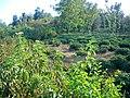 Cemetery - panoramio (33).jpg