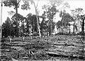 Cemitério da Candelária, Localizado Atrás do Hospital - 284, Acervo do Museu Paulista da USP (cropped).jpg