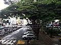 Centro, Franca - São Paulo, Brasil - panoramio (4).jpg