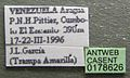 Cephalotes persimilis casent0178626 label 1.jpg