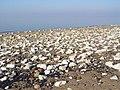 Chalky Beach, Spurn Peninsula - geograph.org.uk - 695461.jpg