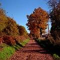 Chemin dans la commune de Videix.jpg