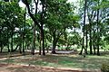 Chhatimtala - South-eastern View - Santiniketan 2014-06-28 5230.JPG