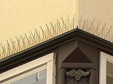 Finestra munita di chiodi contro i piccioni