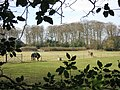 Cholesbury Camp - A Paddock with Horses - geograph.org.uk - 1201139.jpg