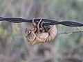 CicadaMoult.jpg