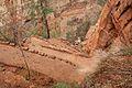 Climbing up to Angels Landing (Zion National Park) (3444019792).jpg