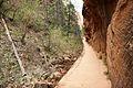 Climbing up to Angels Landing (Zion National Park) (3444021042).jpg