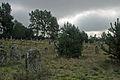 Cmentarz zydowski 7 - 640733.jpg
