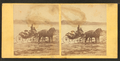 Coach on the beach, from Robert N. Dennis collection of stereoscopic views 2.png