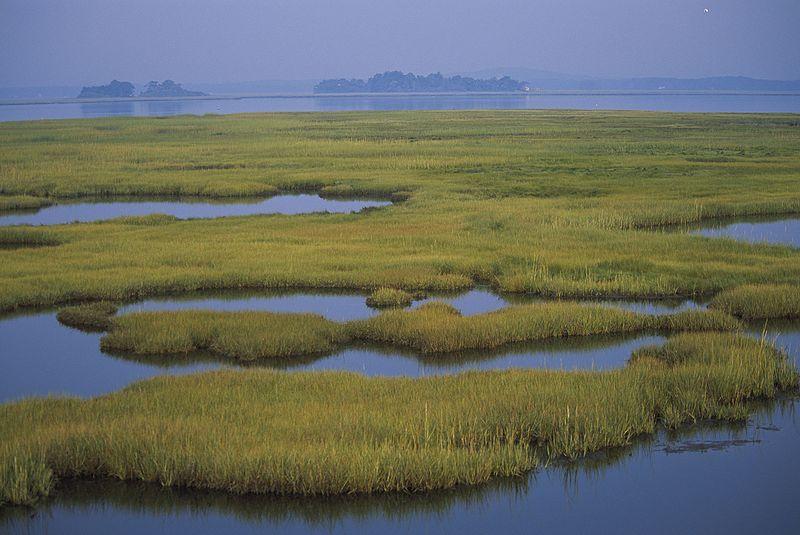 File:Coastal wetlands (5187274473).jpg