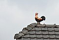 Cock on the roof, Rodaun.jpg