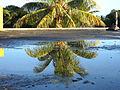 Coconut tree (5026332227).jpg