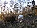 Conservation workers, Heathwaite - geograph.org.uk - 1618591.jpg