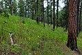 Continental Divide Trail - Flickr - aspidoscelis (39).jpg