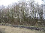 File:Copse by the railway - geograph.org.uk - 1120984.jpg