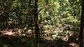 Corbett National Park, India 7.jpg