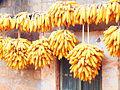 Cornproduction in Yunnan (2).JPG