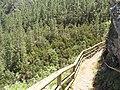 Corona Forestal en El Lomo del Jaral.JPG