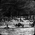 Courses de taureaux les mules, Luchon, 18 juin 1899.jpg