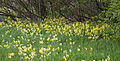 Cowslip Wood (6993930576).jpg
