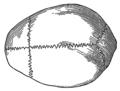 Cranium (PSF).png