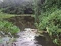 Cuiabá River 06.JPG