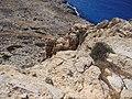 Cyprus Famagusta - panoramio.jpg