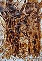 Człowiek kobieta 39x57 05.2012r, obbraz namalowany kawą, wyróżniony na derby artystycznym śląsk - małopolska.jpg