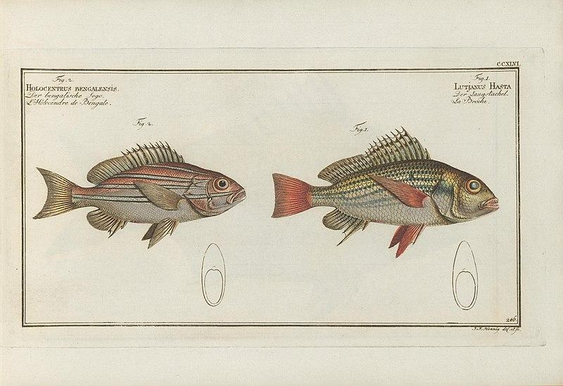 File:D. Marcus Elieser Bloch's, ausübenden Arztes zu Berlin ... Oeconomische Naturgeschichte der Fische Deutschlands (20877040245).jpg