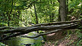 D08 Tiefental Königsbrück Naturschutzgebiet (24).jpg