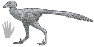 <i>Daliansaurus</i> genus of reptiles (fossil)