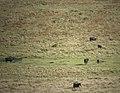Dartmoor-42-Tiere-2004-gje.jpg