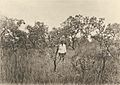 Das südliche Togo (Busse) - Tafel 9 - Baumsteppe bei Amussukovhe.jpg