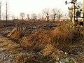 Dawa, Panjin, Liaoning, China - panoramio - Matthew Summerton (2).jpg