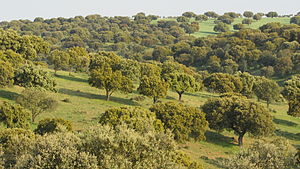 Image of Mediterranean forests, woodlands, and scrub: http://dbpedia.org/resource/Mediterranean_forests,_woodlands,_and_scrub