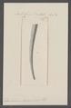 Dentalium bouei - - Print - Iconographia Zoologica - Special Collections University of Amsterdam - UBAINV0274 081 10 0034.tif