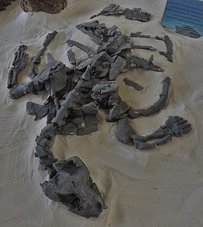 <i>Desmatochelys padillai</i> species of reptile