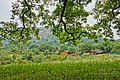 Dhodani,Panvel,Maharashtra - panoramio (8).jpg