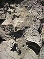 Differentially cemented & eroded sandstone (member C, Uinta Formation, Eocene; Fantasy Canyon, Utah, USA) 48 (24216319684).jpg