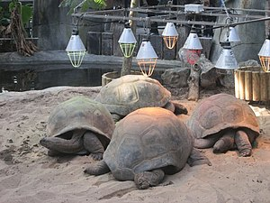 Aldabra - Aldabra tortoises in captivity