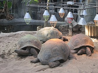Aldabra - Aldabra tortoises in captivity